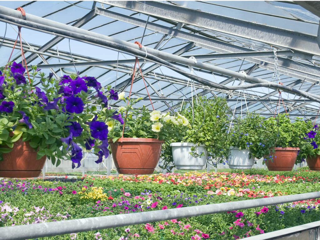 Enerqos settore florovivaistico